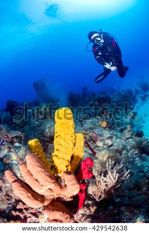 A SCUBA Diver Watches Corals and Sponges Spawning at Dusk - stock photo