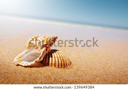 A sea shell and a conch laying in the golden sand of a beach - stock photo