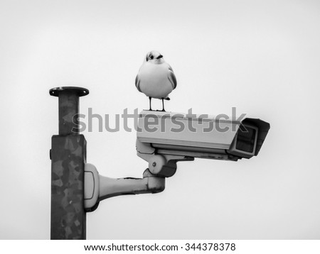 A seagull checks if CCTV Camera works fine.