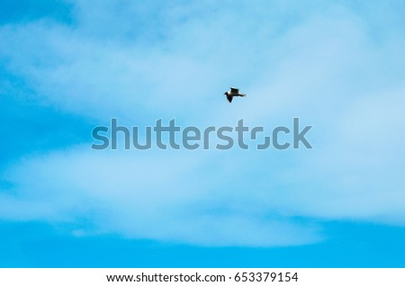 a Seagull flies over the lake of the woods
