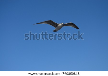 A seagull flying in the sky