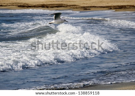 a seagull flying over a wave