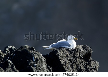A seagull is perched up on a rock. - stock photo
