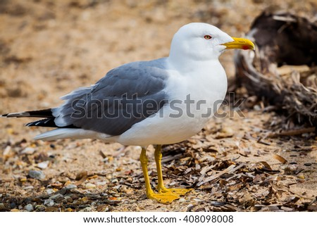 A seagull standing on the beach between rocks - stock photo