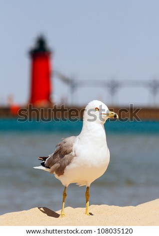 A seagull stands on beach sand with the South Haven Lighthouse and Lake Michigan behind. - stock photo