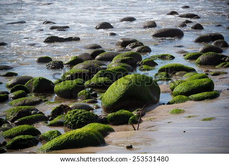 A seascape with moss covered rock on California coast - stock photo