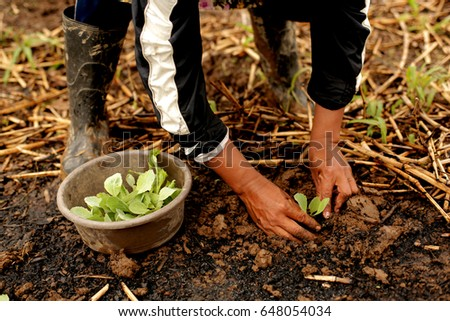 A Seedling/Plant being Planted