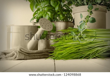 A selection of potted home grown culinary herbs on old wood planked table with watering can and hessian sack.  Leaves in green with other elements in sepia and vignetted for vintage effect. - stock photo