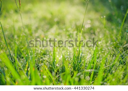 a selective focus of dew drops on green grass leaves and natural green blurred background - stock photo