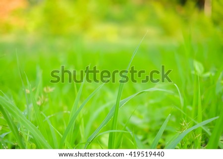 a selective focus picture of green grass leaves and natural green blurred background