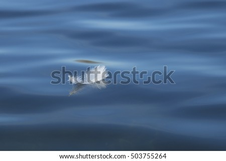A selective focus view of a white feather floating on the surface of a blue lake