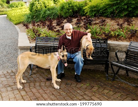 A senior citizen sitting on a bench with his two dog's, a great Dane and a sharpei on a bench in the park.  - stock photo