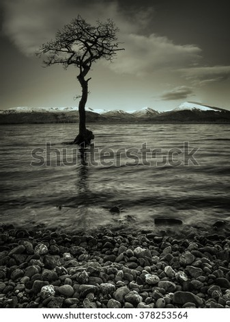 A Sepia toned dramatic sunset over lone tree at Loch Lomond - stock photo