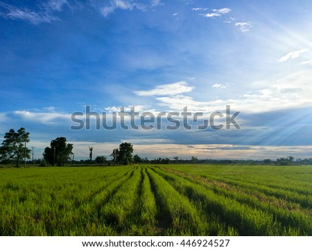 A serene and vibrant rice rice field in rural Thailand with green rice sprouts against bright, blue sky with syn rays in the background