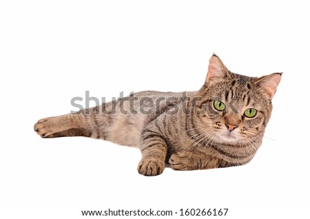A serious looking tabby cat with large green eyes on a white background