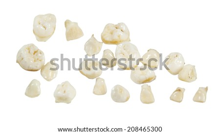 A set of baby teeth kept as a childhood keepsake - path included - stock photo