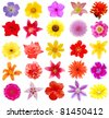 A set of blooms in summer - stock photo