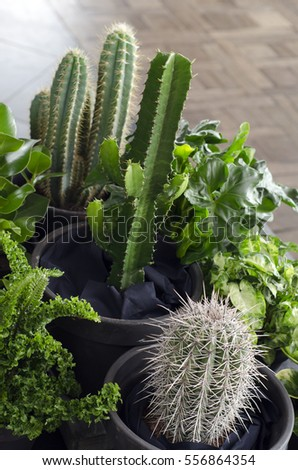A set of cactuses on a table in a restaurant
