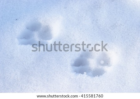 A set of dog tracks in the winter snow.