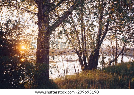 A set of fresh birch leaves in the sunset with a beautiful blurry background. Image has a vintage effect.