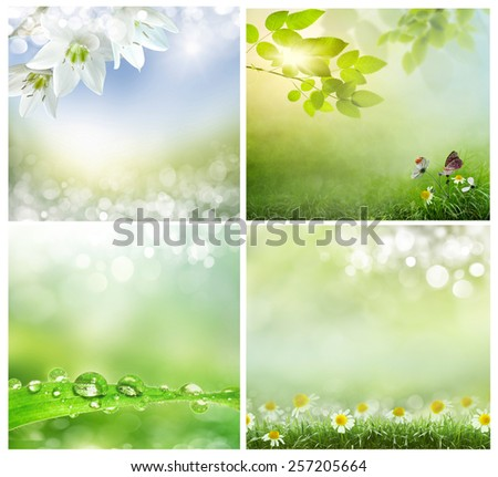 a set of photos of spring backgrounds - stock photo