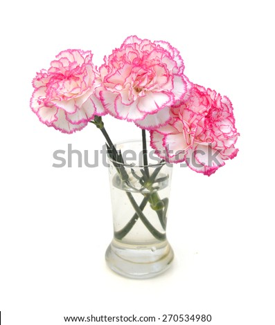 A set of three carnation flowers in vase on white background  - stock photo