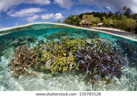 A shallow coral reef, composed of a diversity of hard and soft corals, grows near an idyllic tropical island in the Solomon Islands.  This area is within the famous Coral Triangle. - stock photo