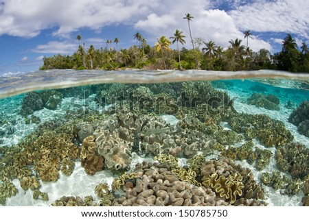 A shallow coral reef, composed of soft leather corals, grows near an idyllic tropical island in the Solomon Islands.  This area is within the famous Coral Triangle. - stock photo
