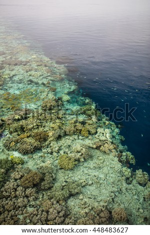 A shallow coral reef drops precipitously into the depths in Wakatobi National Park, Indonesia. This beautiful and remote area harbors an extraordinary amount of marine biodiversity.