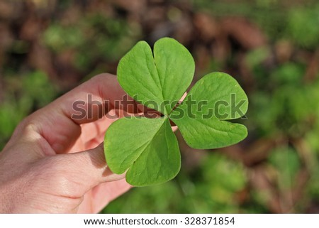 A shamrock in the hand