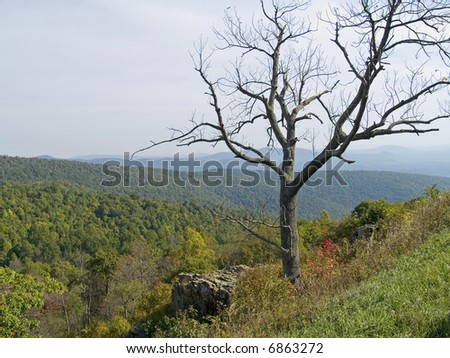 A shapely dead tree frames the scenic view along Skyline Drive at Shenandoah National Park in West Virginia.