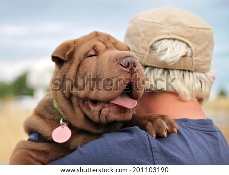 a sharpei puppy being held  - stock photo
