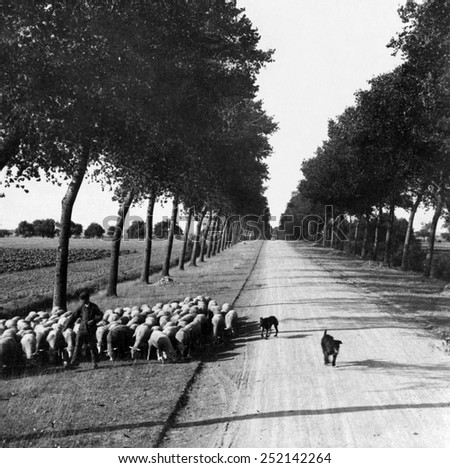 A sheep herder and his flock on a road to Chartres, France, 1908. - stock photo