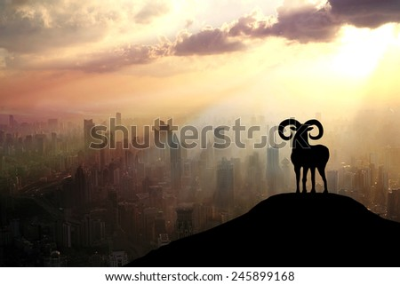 A sheep in the morning. - stock photo