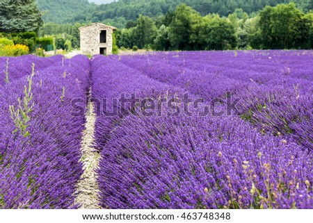 A shelter in a lavender field in Province France