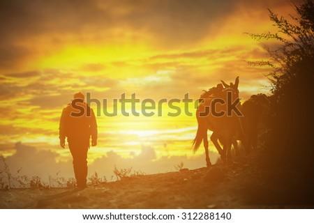A shepherd with a caravan of donkeys, Silhouette  - stock photo