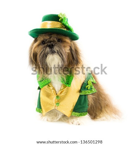 A Shih Tzu dog is dressed in a St. Patrick's Day outfit.