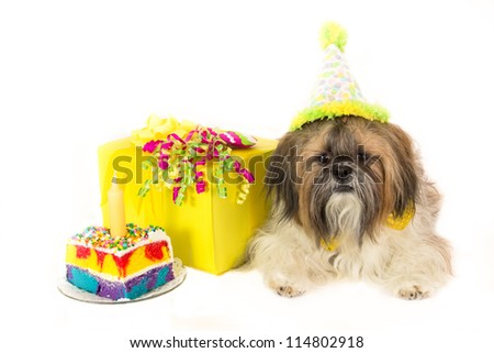A Shih Tzu wearing a party hat guards a cake and a birthday present.