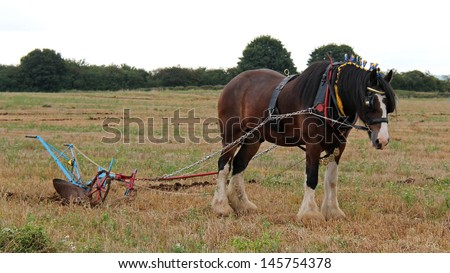 A Shire Horse Pulling a Vintage Farming Plough. - stock photo