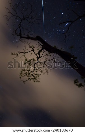 A shooting star seen through tree branches which are backlit with passing clouds - stock photo