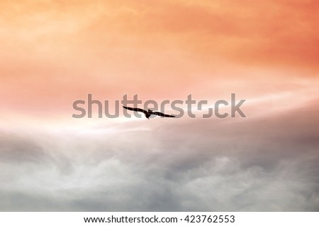 A shot of a seagull flying at sunset