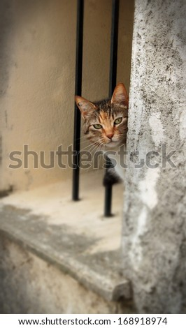 A shot of a young tabby or tortoiseshell cat peeping around  a rough stone Mediterranean window frame in France.  The cats head and shoulders are showing.  - stock photo