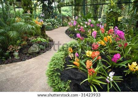 A shot of beautiful orchid garden in Singapore. - stock photo
