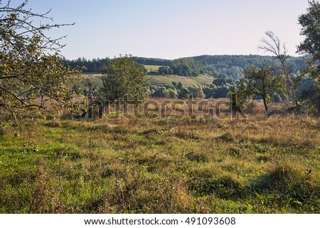 A shot of nature in Russia. Green meadow. Sunny day and clear sky.