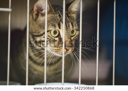 A sick cat in a metal cage of a vet clinic. - stock photo