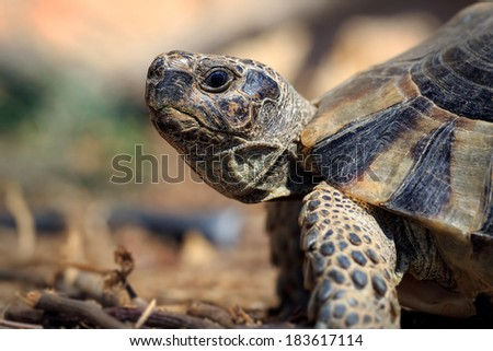 A side close up from a small tortoise - stock photo