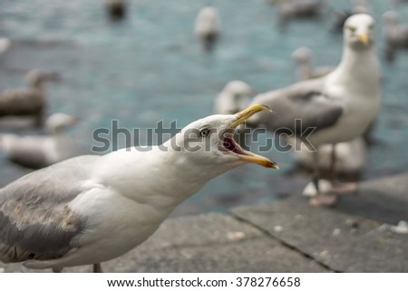 A side View of a Seagull with Open Mouth Shouting, Close-up - stock photo