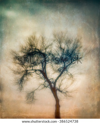 A silhouette of a bare, winter tree at sunset with an added artistic texture giving the image an ethereal feel.