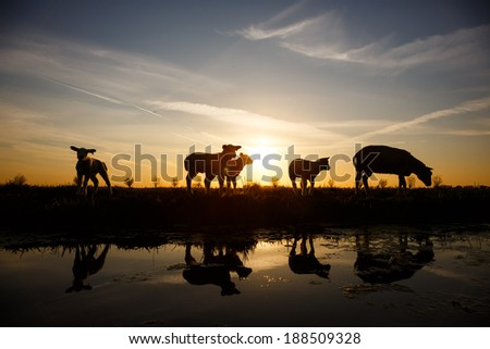 a silhouette of a sheep and lambs