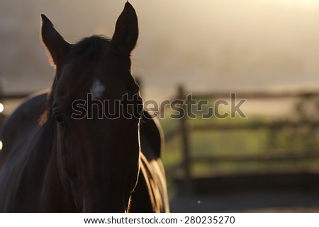 A silhouette photo of a horse in the sunset. - stock photo